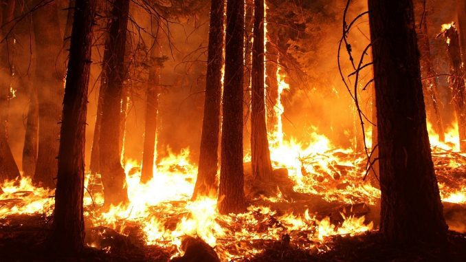 forest-fire-678x381